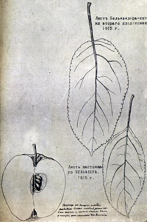 Страница из дневника И. В. Мичурина.